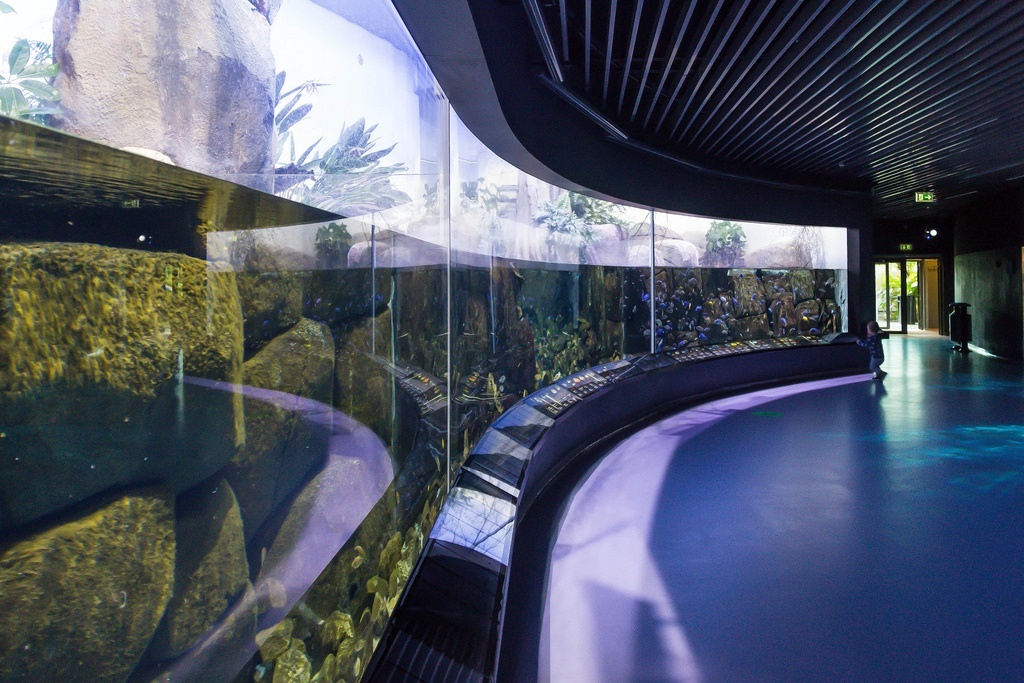 akvarium photo
