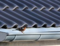 Bird Robin Songbird Garden Nature